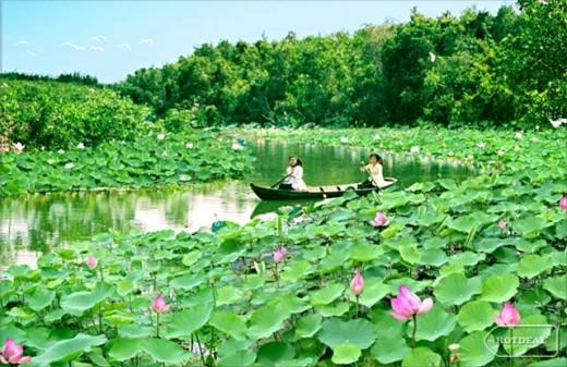 Dreaming lotus pond