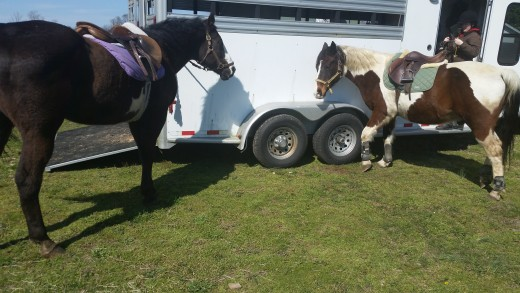 Romeo and Buddy both load well. Romeo always has to stare into the trailer for a minute before he gets on,but always steps right on with encouragement.