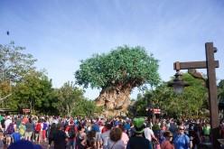 5 Best Disney World Attractions