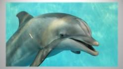 Jett: A Dolphin Artist
