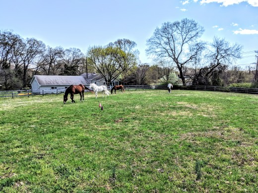 When we are at work or school, the horses are living it up. Relaxing out in their field with friends!