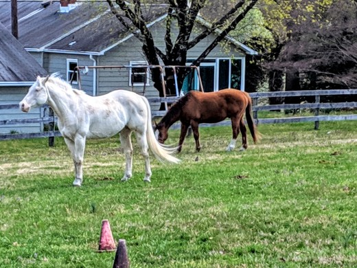 Horses enjoying a peaceful Monday morning!