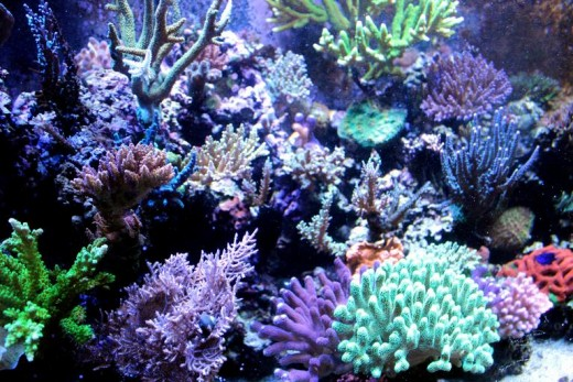 Ocean coral of many different colors. An example of beautiful sight.