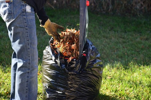 A rubber rake and black bin bag are used to collect fallen leaves.
