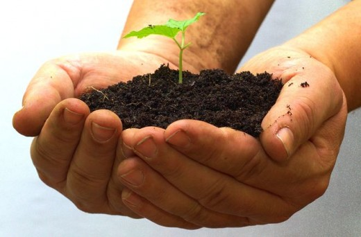 Live soil is teeming with various forms of life that work with the plants to help them produce a harvest and to improve the soil.