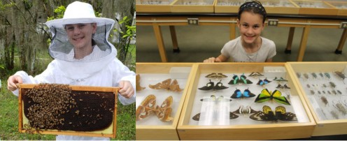 Visiting a beekeeper and seeing mounted insect collections