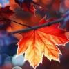 Faiza shah profile image