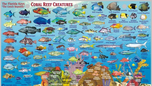 Here are just a few of the fish you might encounter when fishing or diving in the Florida Keys