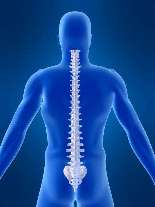 Spine showing backbone