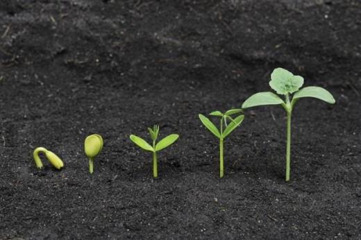 Growing Seed