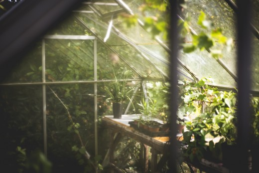 Interior view of a small greenhouse growing potted plants.
