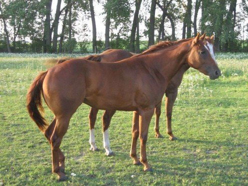 Typical of horse breeding stock
