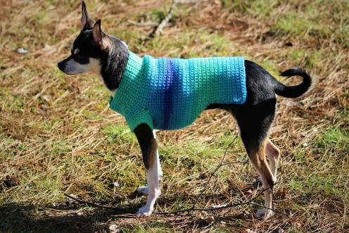 Ombre Dog Sweater