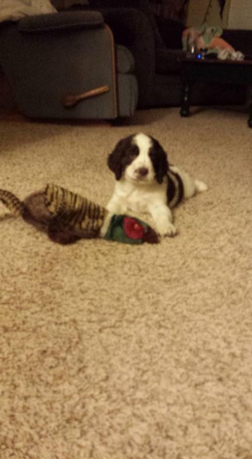 That stuffed pheasant didn't last long.