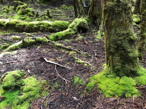 Moss covered trees at Waldheim