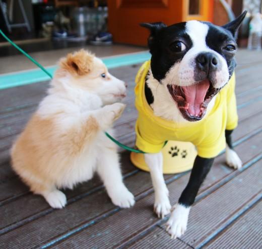 Doggy Cafe