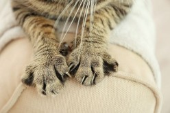 Why Do Our Pet Cats Knead?