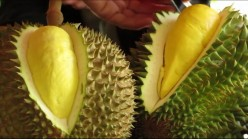 All Hail the King of Tropical Fruits