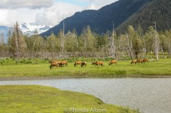 Top Five Things to Do in Anchorage Alaska