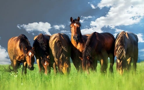 Six horses grazing