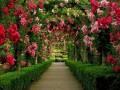 Where Always Lillies Bloom!