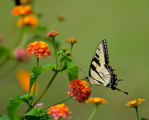 The butterfly garden is quiet and sweet.