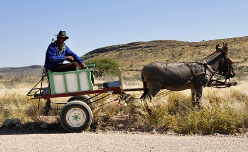 Donkeys Can Pull Wagons, Plow Fields, And Be Able To Love Children.