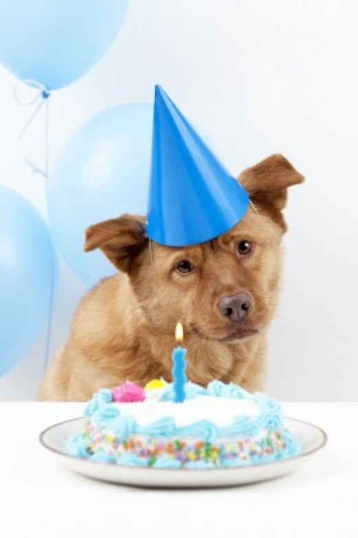 Throw a dog birthday party for your pooch!