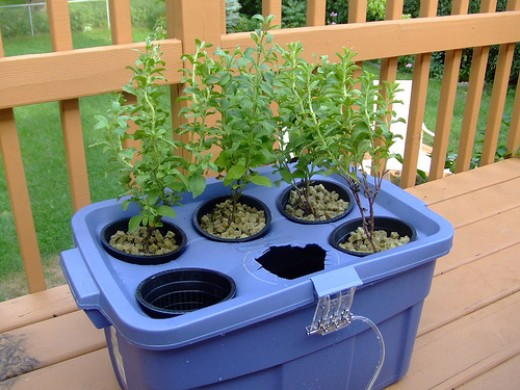 Hydroponic Gardening Systems for Beginners Grow