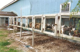 Cages at an overpopulated puppy mill.