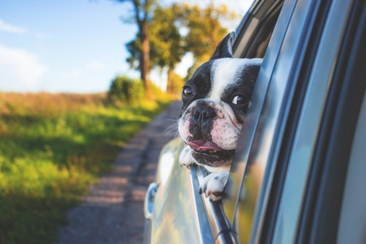 Don't ever keep windows closed even for a moment with your car parked in the sun when there is a pet inside. They can die in the heat!