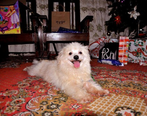 Kujo, our loving dog for seven years
