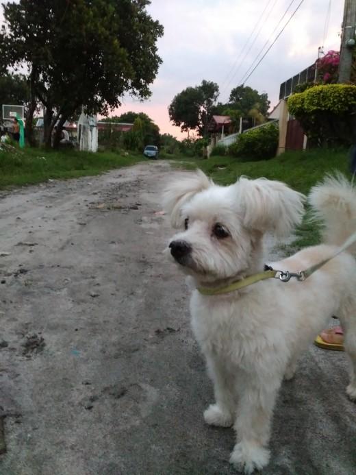 Kujo taking a walk