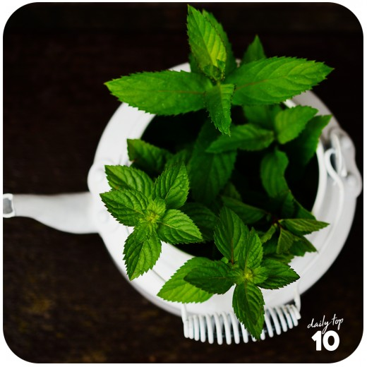 Weird Weight Loss Tip: Peppermint is your best friend in losing weight!