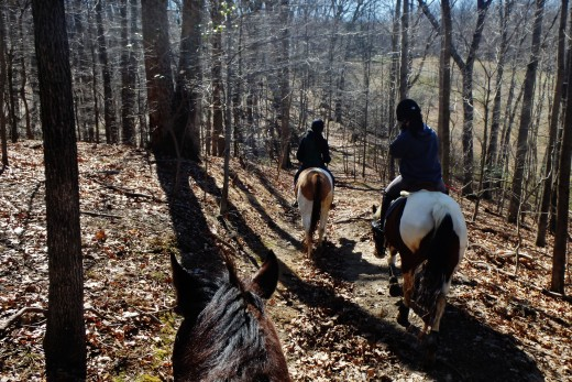 Even a horse that is just a good safe trail horse has a better chance of finding a good home than a green horse.