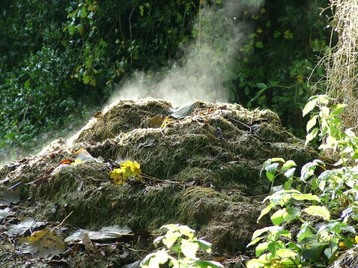This steamy compost heap is full of good soil organisms and will make excellent fertile mulch for the ground.