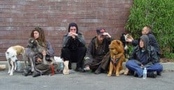 Human Services: Dealing with Homeless Youth in America
