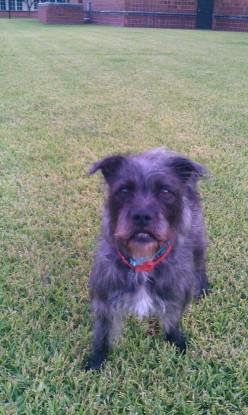 5 Ways to Determine a Dog's Age