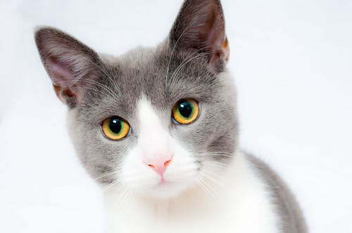 Cats' Names Are Much Like Girls' Names--Kitty, Kitten, To Name Two.