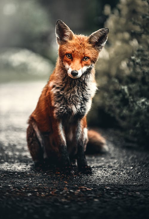 Girls In The 70's Were Called Foxes.