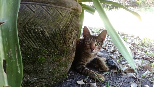 A picture of Winky, one of our cats, after exploring our backyard