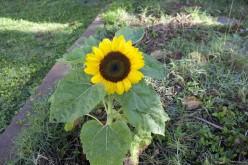 Growing organic food takes less effort than normal gardening