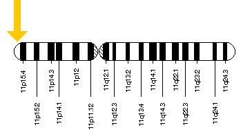 HBB gene, which is responsible for SCD is located on the short (p) arm of chromosome 11.