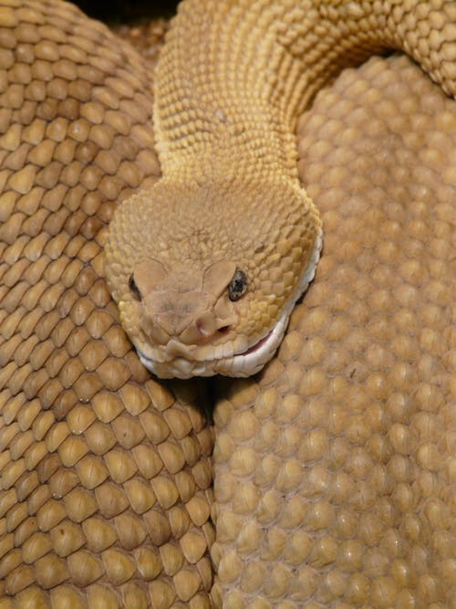Sure, Snakes Can Be Lethal, But They Deserve Life Just Like Us.