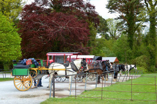 Carriage rides are a common offering at some of the larger attractions.