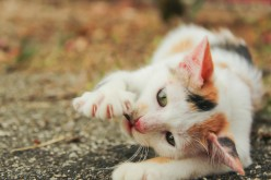 Why Do People Declaw Their Cats