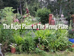 The Right Plant in The Wrong Place