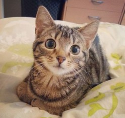 The Purr-Fect Start: Four Ways to Prepare for Your New Kitten