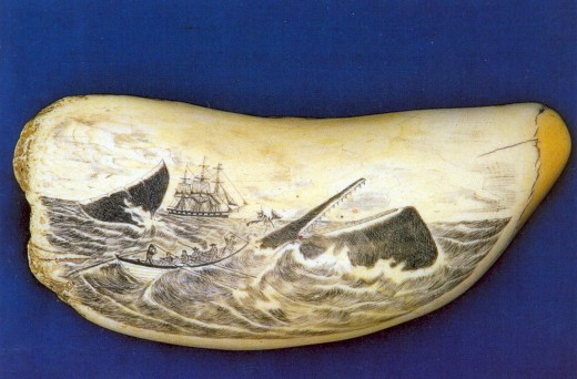 Actual Scrimshaw carved on a whale's tooth by a sailor from the Azores.