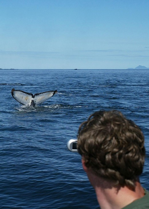 Now we shoot whales with cameras.